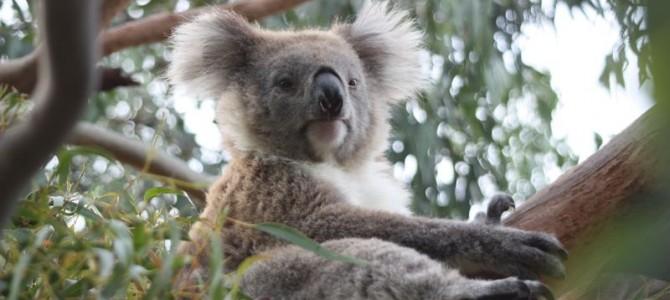 Tipps für eine Reise nach Australien